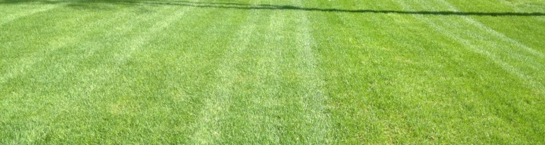 Entretien paysager – Tonte soignée de votre pelouse
