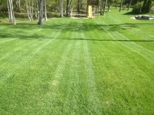 Entretien paysager - Tonte soignée de votre pelouse